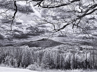 bursting_maple_buds_ascutney_IR__5100988