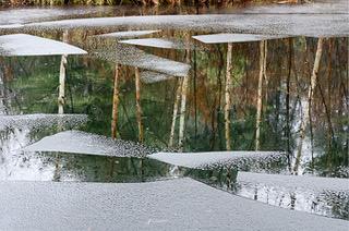 new_ice_rain_tree_reflectionsGSC_1406