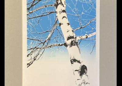 birch tree-01-1