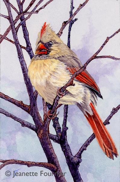 American Cardinal Female III WI