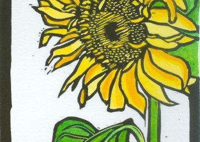 Sunflower2 web